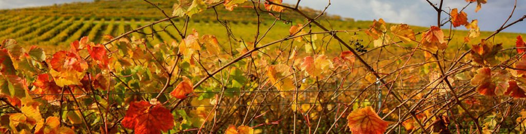 Fall-Colors-banner